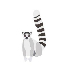 Flat lemur on white background vector