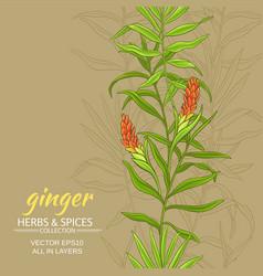 Ginger background vector