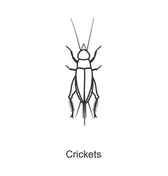Insect cricket iconline icon vector