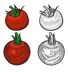 set tomatoes isolated on white background vector image