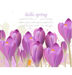 spring background with purple tulips vector image
