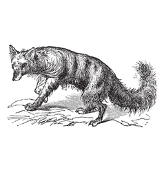 Vintage Aardwolf Sketch vector image