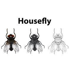 Doodle animal for housefly vector