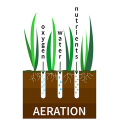 lawn aeration process concept vector image