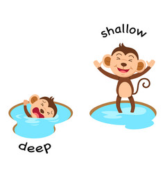 opposite words deep and shallow vector image vector image