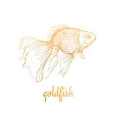 goldfish drawing sketch vector image vector image