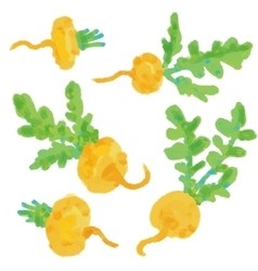 Set Turnip Hand drawn painting on white vector image vector image