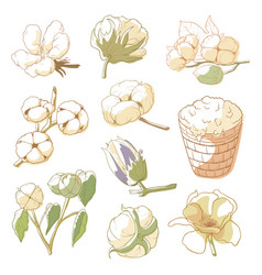 Cotton plant set vector