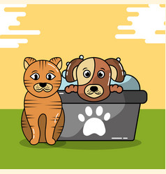 Pet cat and dog vector