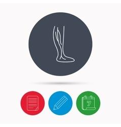 Phlebology icon Leg veins sign vector