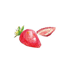 Two raw strawberries watercolor vector