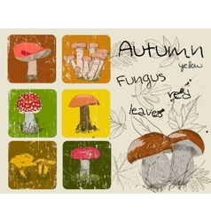 Vintage poster with autumn plants and fungis vector