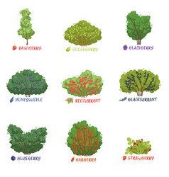 Different garden berry shrubs sorts with names set vector