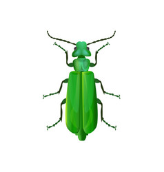 Spanish fly beetle vector