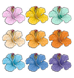 Multicolored tropical flowers hibiscuses isolated vector