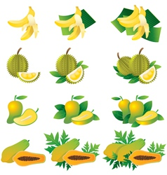 Banana Durian Mango Papaya vector image vector image