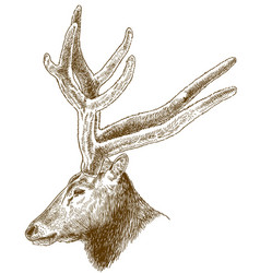 engraving of big deer head vector image