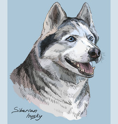 Colored hand drawing portrait siberian husky vector