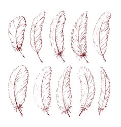 hand drawn feathers vector image