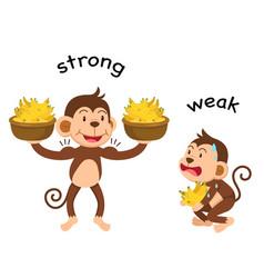 Opposite words strong and weak vector