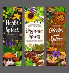 spices culinary herbs cooking herbal seasonings vector image