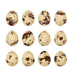 quail eggs on a white background vector image vector image
