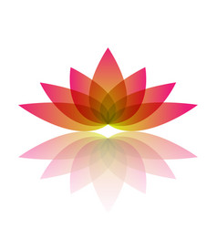 Beautiful water lily flower vector