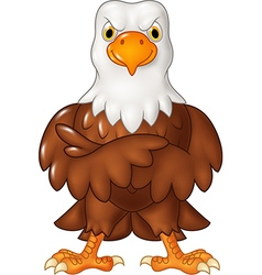 Cartoon funny eagle cartoon posing isolated vector image