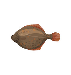 Detailed flat design of brown flounder fish vector