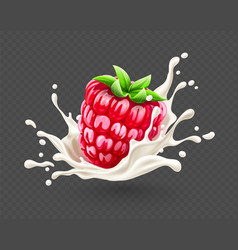 ripe red raspberry fruit vector image