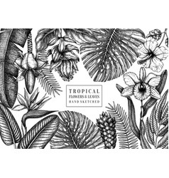 summer design with tropical plants hand drawn vector image