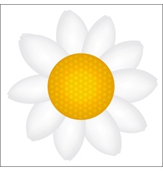 Beautiful Daisy icon vector image