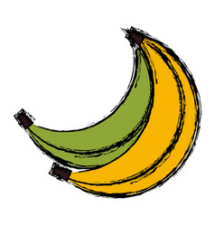 delicious bananas fruits vector image