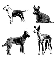 dogs sketch vector image