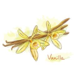 Flower vanilla dried pods vector