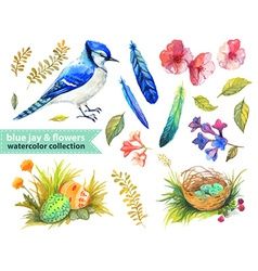 Blue jay and flowers collection vector image
