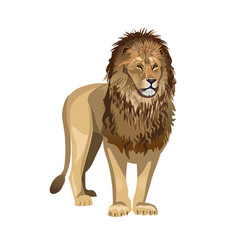 african lion vector image