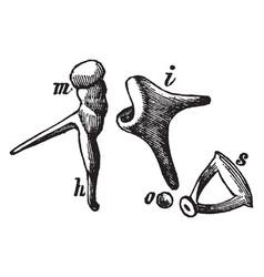 Bones of the ear vintage vector