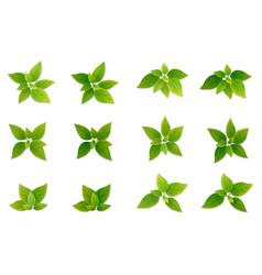 green realistis leaf set vector image vector image