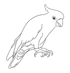 Cockatoo bird line art 05 vector