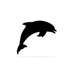 dolphin icon concept for design vector image