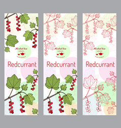 Herbal tea collection red currant banner set vector