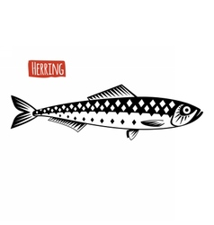 Herring black and white vector image