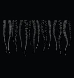 doodle line floral on black background vector image
