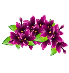 Lilac Flower Branch vector image