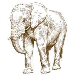 Engraving drawing big elephant vector