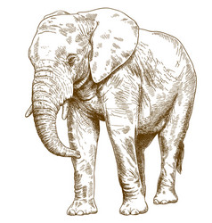 Engraving drawing of big elephant vector