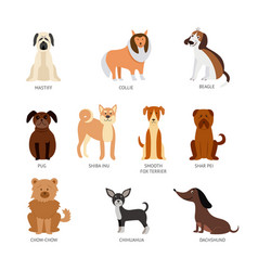 set breeds pets animals and dogs vector image