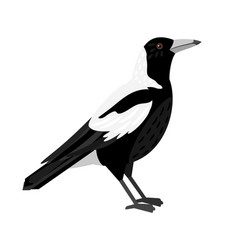 Traditional magpie bird vector