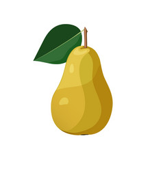 yellow pear on white background vector image